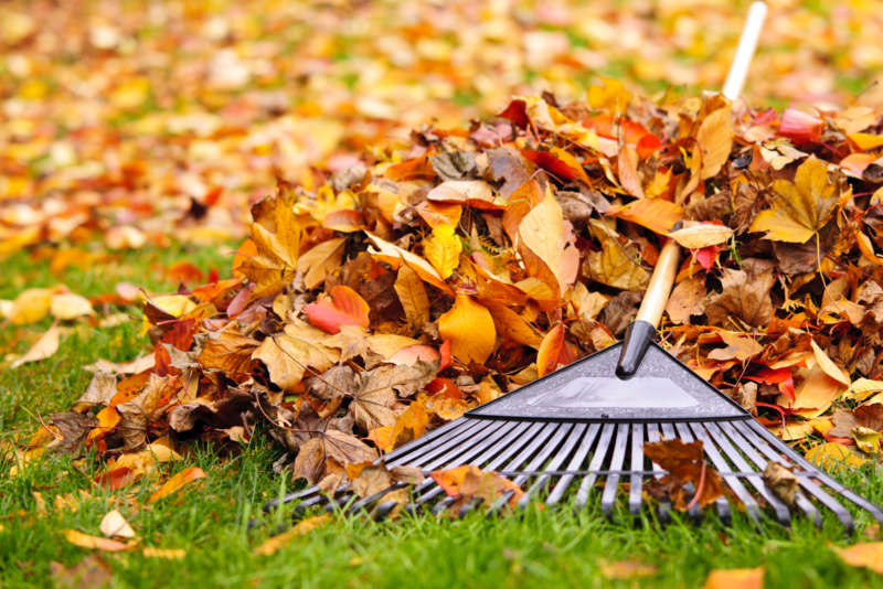 10 Tips For Avoiding Back Pain While Raking This Fall